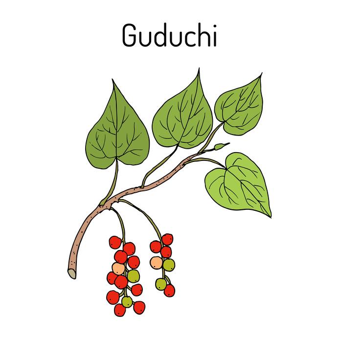 Ayurvedic Guduchi: Histamine Stabiliser