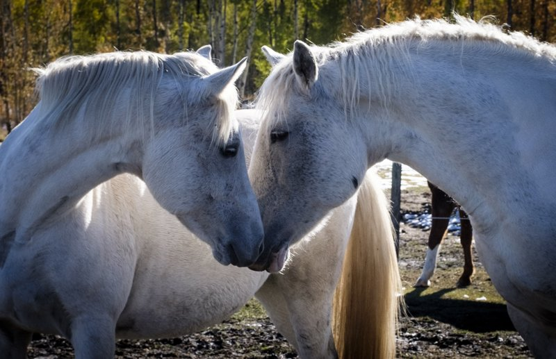 Why Horses: All We Have in Common – and Not