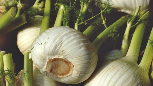 Fennel   How To Improve Eye Health Naturally