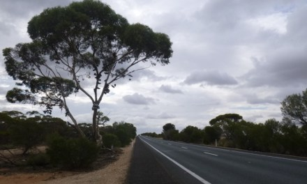 Shoe Trees in South Australia