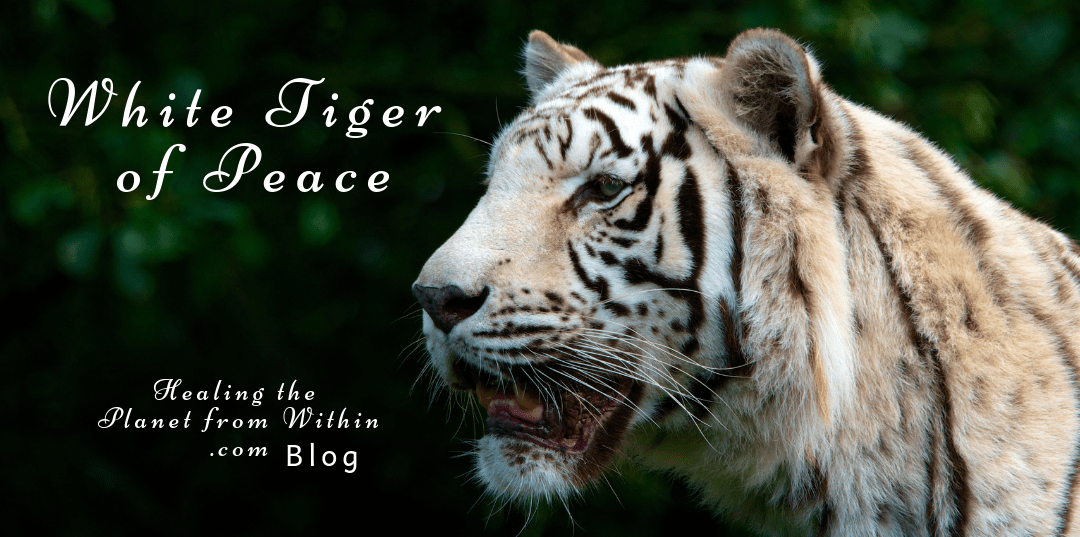 White Tiger of Peace