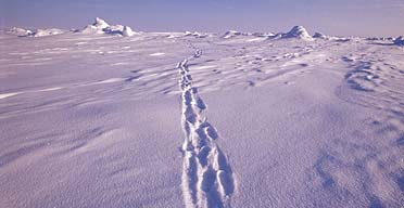 Healing Topical Steroid Withdrawal More Challenging than an Expedition to the North Pole…  (1/2)