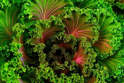 Healthy Curly Kale