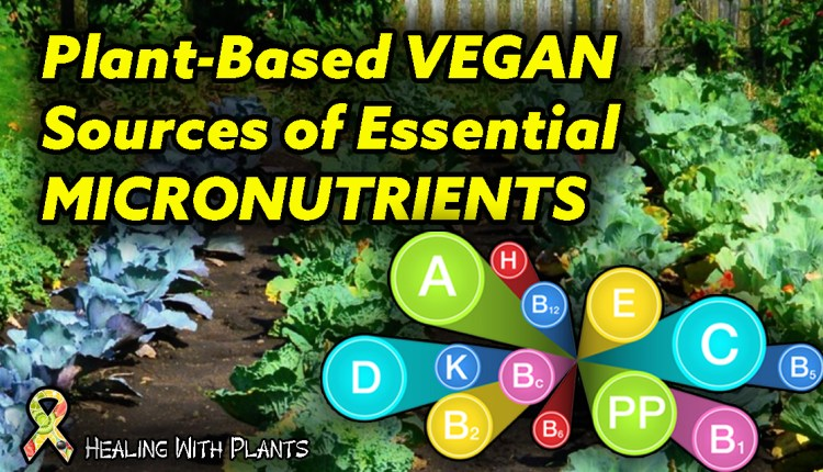 Plant-Based | Vegan Sources of Vitamins and Minerals