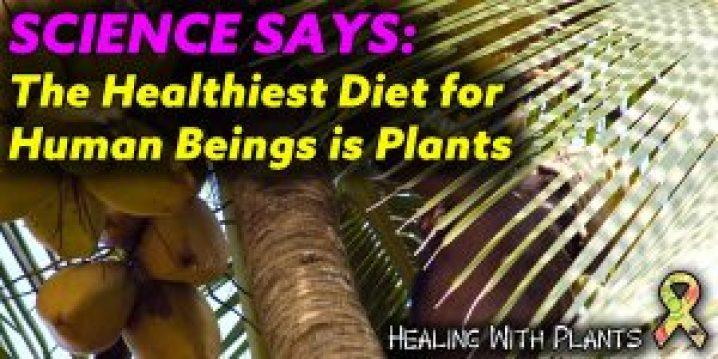 The Healthiest Diet For Human Beings Is Plants Healing With Plants