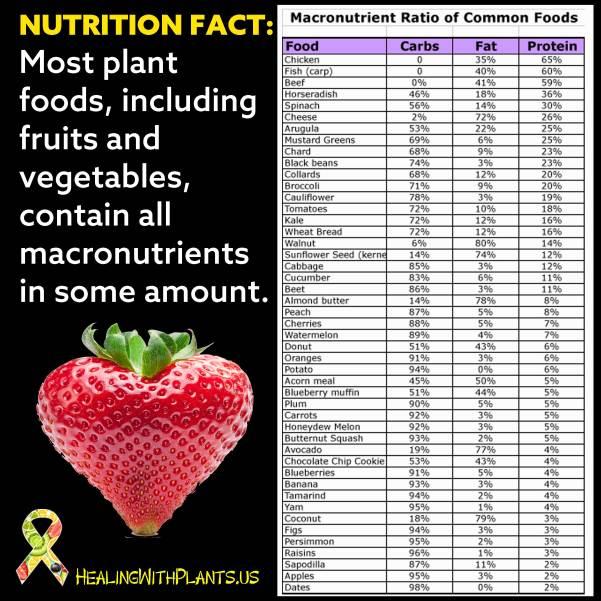 Macronutrient Ratio of Common Foods Chart