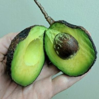 A gorgeous avocado is about to become vegan sushi.