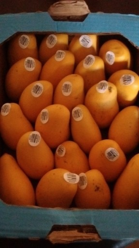 Mango smoothie recipe has just three simple ingredients.
