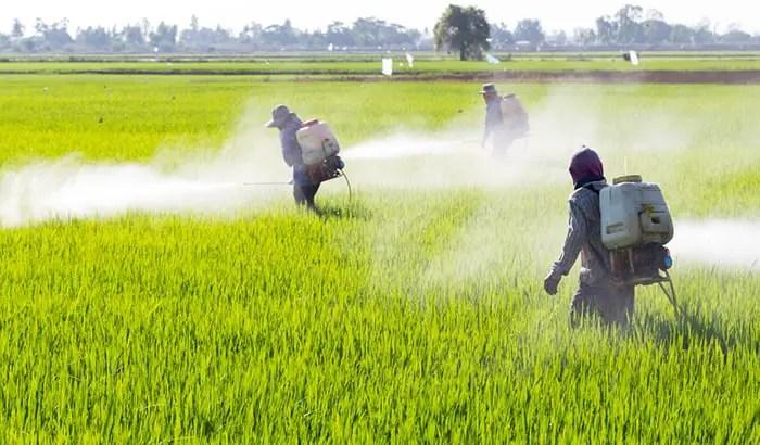 Schwermetalle Umweltgifte