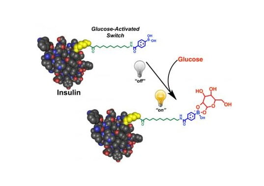 Scientists have developed a smart insulin that self-activates in response to blood sugar levels. When blood sugar is high, the insulin becomes active, working quickly to normalize blood sugar levels. One injection of the smart insulin, called Ins-PBA-F, can repeatedly and automatically normalize blood sugar levels over a minimum of 14 hours in mice with a type 1 diabetes-like condition. Scientists are now developing the modified insulin into a therapy suitable for human use. Doing so would greatly improve the health and quality of life for diabetics.  Credit:  Matthew Webber.