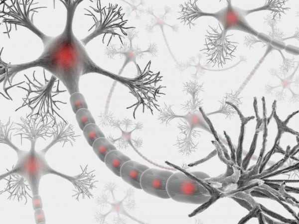 Protecting women from multiple sclerosis - neuroinnovations