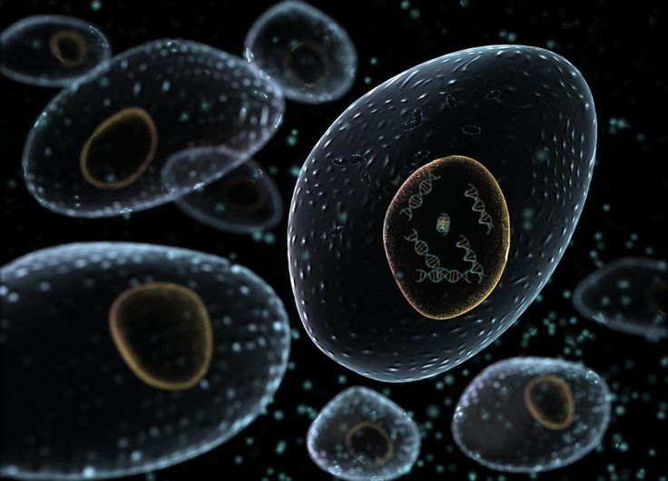 Intelligent bacteria for detecting disease - healthinnovations