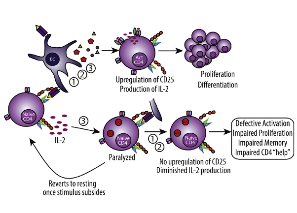 """Primary T cell activation involves the integration of three distinct signals delivered in sequence: (1) antigen recognition, (2) costimulation, and (3) cytokine-mediated differentiation and expansion. Strong immunostimulatory events such as immunotherapy or infection induce profound cytokine release causing """"bystander"""" T cell activation, thereby increasing the potential for autoreactivity and need for control. We show that during strong stimulation, a profound suppression of primary CD4+ T-cell-mediated immune responses ensued and was observed across preclinical models and patients undergoing high-dose interleukin-2 (IL-2) therapy. This suppression targeted naive CD4+ but not CD8+ T cells and was mediated through transient suppressor of cytokine signaling-3 (SOCS3) inhibition of the STAT5b transcription factor signaling pathway. These events resulted in complete paralysis of primary CD4+ T cell activation, affecting memory generation and induction of autoimmunity as well as impaired viral clearance. These data highlight the critical regulation of naive CD4+ T cells during inflammatory conditions. Out-of-Sequence Signal 3 Paralyzes Primary CD4+ T-Cell-Dependent Immunity. Murphy et al 2015."""