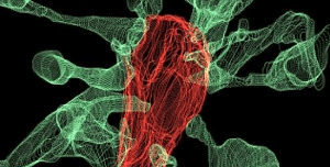 Microglia filmed shaping synapses for the first time by researchers at the European Molecular Biology Laboratory (EMBL). The image shows multiple synapse heads send out filopodia (green) converging on one microglia (red), as seen by focused ion beam scanning electron microscopy (FIBSEM). Credit: L. Weinhard, EMBL Rome.