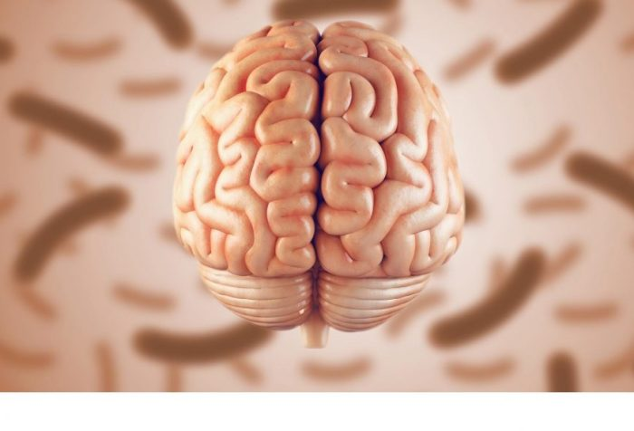 a study from researchers at two U.S. Department of Energy national laboratories traces the molecular connections between genetics, the gut microbiome, and memory in a mouse model bred to resemble the diversity of the human population. The team states one day it may be possible to use probiotics to improve memory in people with learning disabilities and neurodegenerative disorders.