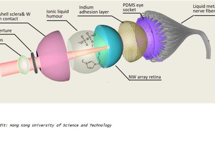 a study from researchers led by HKUST develops the world's first 3D artificial eye surpassing the capabilities of pre-existing bionic eyes and in some cases, exceeding those of the human eyes. The team states their electrochemical eye replicates the structure of its natural counterpart to proffer sharper visual acuity in the future, with extra functions such as the ability to detect infrared radiation in darkness.