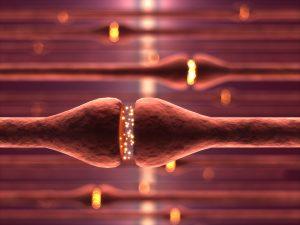 neurons cells