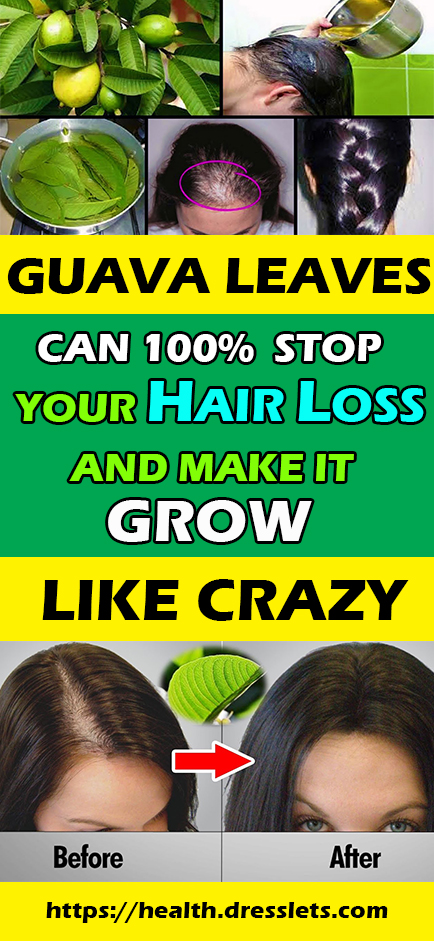 GUAVA LEAVES CAN 100% STOP YOUR HAIR LOSS AND MAKE IT GROW LIKE CRAZY