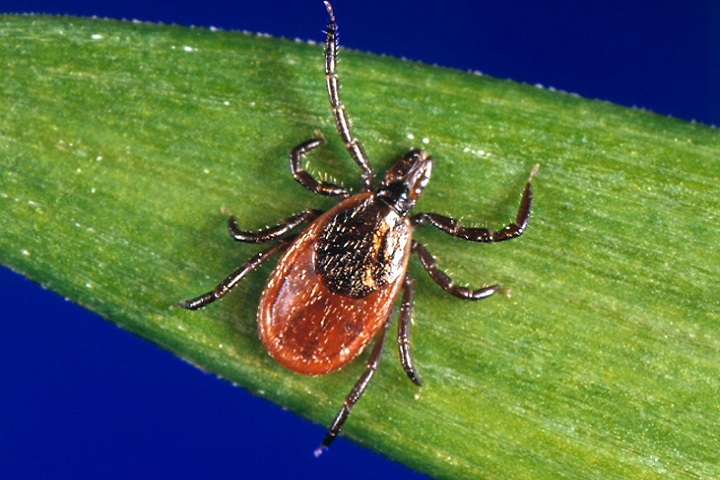 Protect your family from Lyme disease this summer   Health.mil