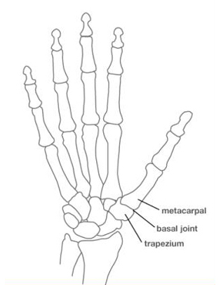 Diagram Wrist Bone Diagram