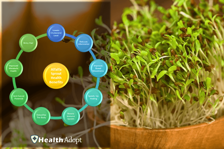 Alfalfa Sprouts 9 Magical Health Benefits