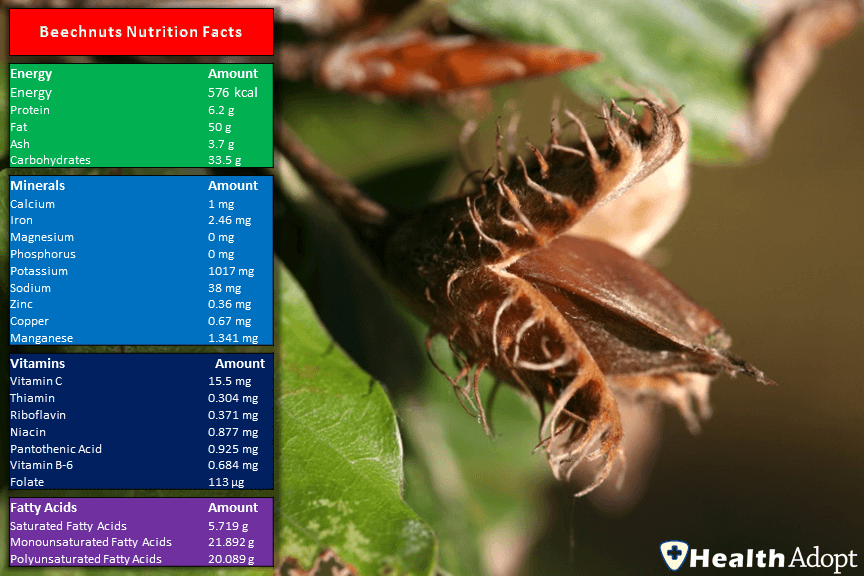 Beechnuts Nutrition Facts And Nutrients Value