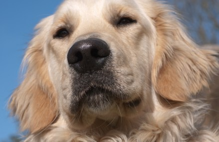 The Symptoms and Treatment Options for Hip Dysplasia in Dogs