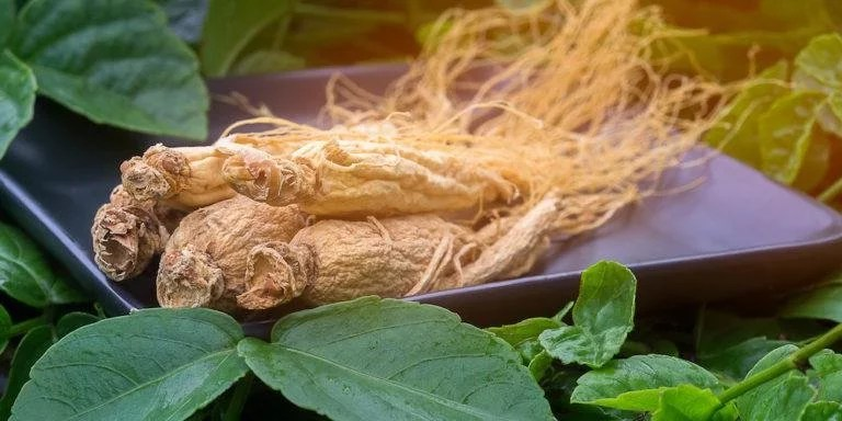 Ginseng against fatigue