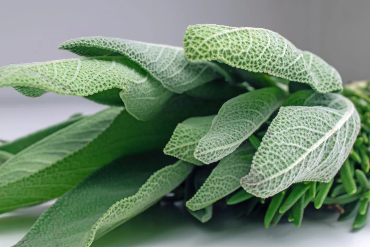 the 11 health benefits of sage.