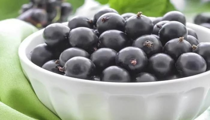 6 Shocking Health Benefits Of Black Currant