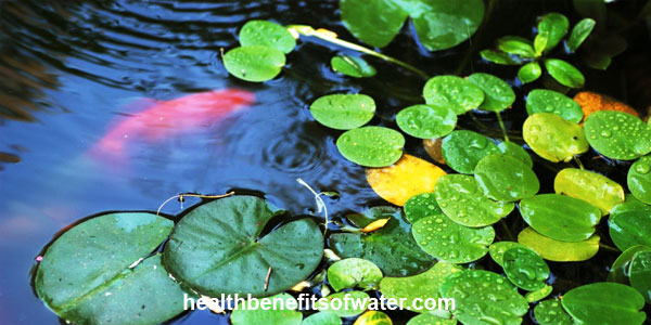 Feng Shui Water: How to Attract Good Energies