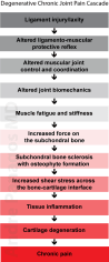 The degenerative chronic joint pain cascade describes the important factors that lead to arthritis, weakness and chronic pain. It is due to injury or the ageing process.