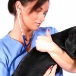 Veterinary Technician Salary
