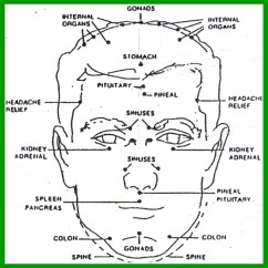 Pressure Points Diagram Massage Wiring Box Trailer Lights Welcome To Health Check Cafe Reflexology Corner