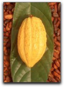 Punta Gorda Antioxidant Chocolate
