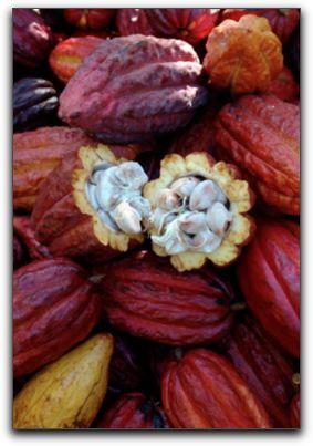 SW Florida Antioxidant Chocolate
