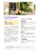 Download catalog-nugget