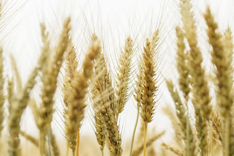 Gluten Sensitivity or Celiac Disease | El Paso Texas Chiropractor