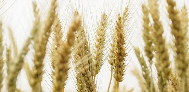 Gluten Sensitivity or Celiac Disease | El Paso Texas Chiropractor