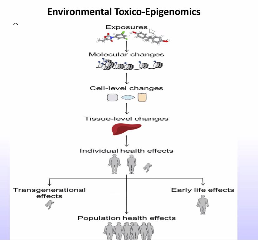 Aplinkos toksikoepigenomika