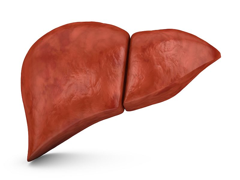 human liver on a white background, 3d render