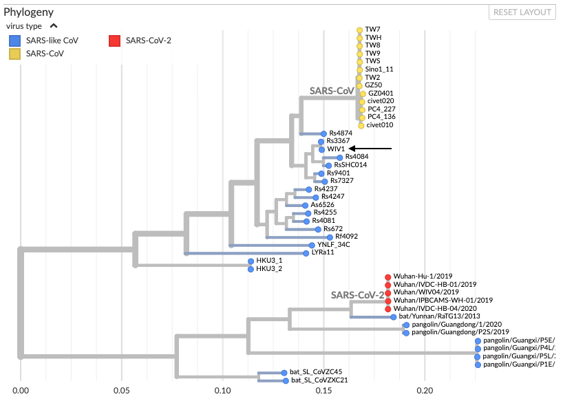 Did the COVID-19 virus originate from a lab or nature