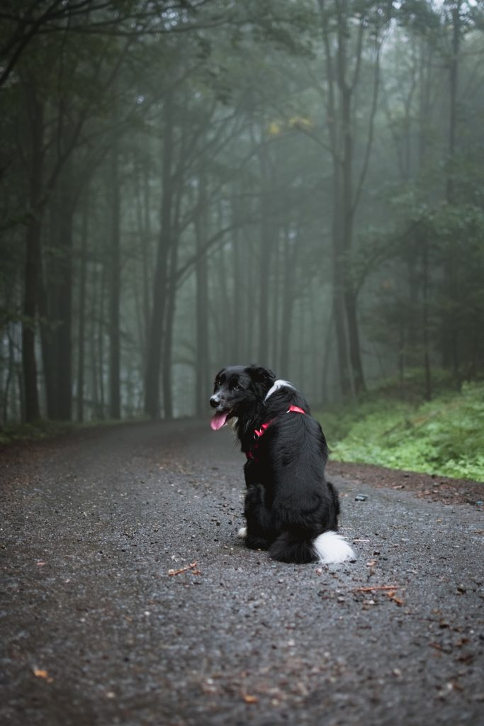 how to calm scared dog, Why Can't My Dog Relax? How To Calm Your Scared Dog
