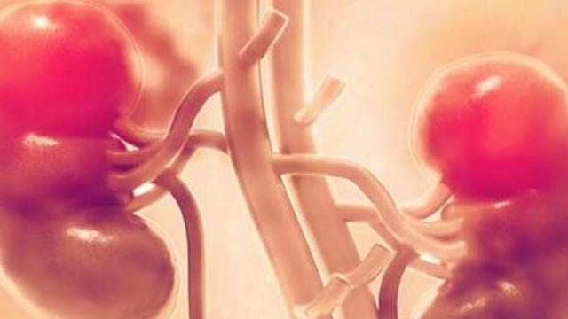 आयुर्वेद में गुर्दा रोगियों का इलाज मुमकिन : शोध