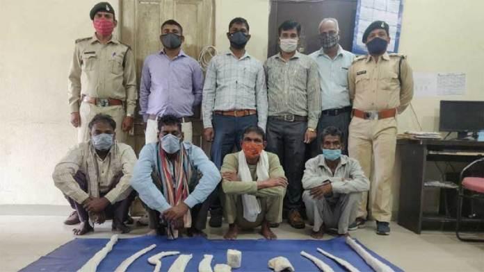 तेंदुए का शिकार करने के आरोप में 4 आरोपी गिरफ्तार