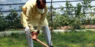 मुख्यमंत्री श्री चौहान ने मुख्यमंत्री निवास में मौलश्री का पौधा रोपा