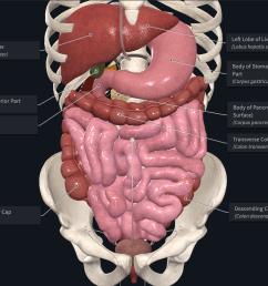 liver lobe diagram labeled [ 1886 x 1418 Pixel ]