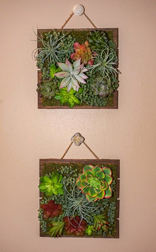 Check out this great tutorial on how to make your own DIY Faux Succulent Hanging Garden. They are fun, colorful, and require absolutely no maintenance!