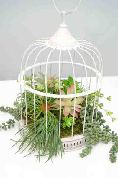 Easy DIY Succulent Birdcage Garden