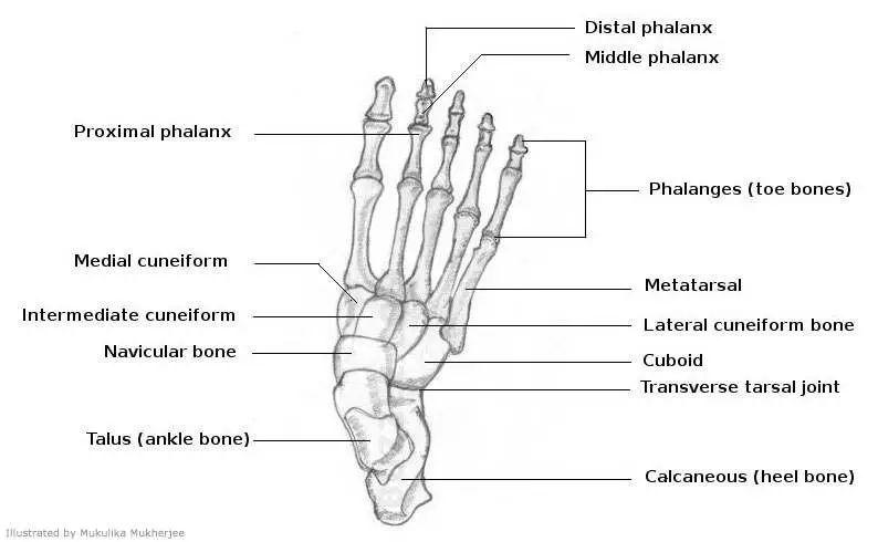 blood diagrams encyclopedia